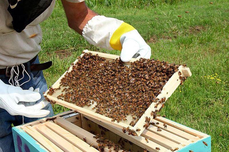 Bee Farming hive